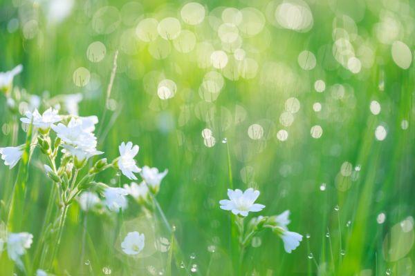 秋の七草をご存知ですか。秋の七草とその覚え方教えます。