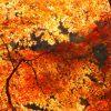 明治神宮外苑の 紅葉の見頃やライトアップについて