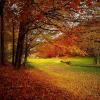 東京で、紅葉を楽しめる穴場をしっていますか?