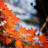 2016年の養老渓谷の紅葉の見頃