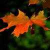 養老公園の紅葉の見ごろは?