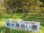 栗拾い・関東・人気