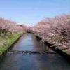 2017年のお花見は、海老川ジョギングロードで健康的にお花見をしよう。桜の開花や見頃どこよりも先に教えます。耳寄り情報多数あり!