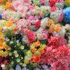 フラワーフェスティバル広島の2019年のゲストは?見どころや駐車場情報は?